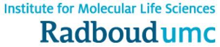 Link P. Buma to RIMLS   Orthopaedic Research Laboratory Nijmegen   Radboud University Medical Centre   radboudumc